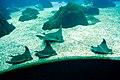 OCEANARIO - ACUARIO DE LISBOA