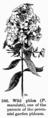 Manual of Gardening fig246.png