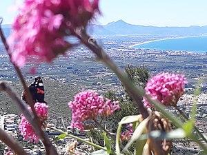 Mariposas haciendo su trabajo en el Montgó.jpg