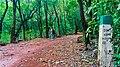 Matheran in August2012 - panoramio (29).jpg