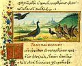 Medici birds.jpg