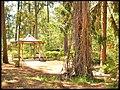 Mercer's Arboretum Gazebo - Flickr - pinemikey.jpg