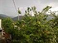 Mesken e Yağmur Yağarken ( R. Nazilli ) - panoramio.jpg