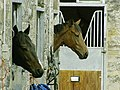 Middleham racing stable - geograph.org.uk - 346203.jpg