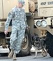 Military narcotics dog 2.jpg