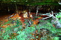 Minerals-muck-in-cave1 - West Virginia - ForestWander.jpg