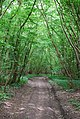 Monarch's Way inside Lodge Coppice - geograph.org.uk - 470705.jpg