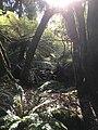 Monga National Park flora.jpg