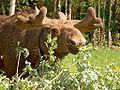 Moose-Antlers-hp1898.jpg