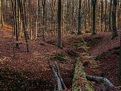 Mordgrund Herbst-20201107-RM-160439.jpg