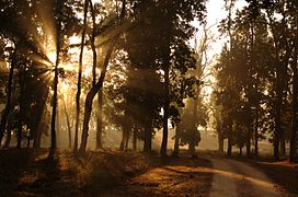 Morning-in-kanha-park.jpg