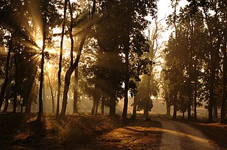 Kanha Tiger Reserve - Image: Morning in kanha park