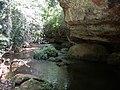 Mount Nimba Strict Nature Reserve-108453.jpg