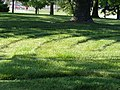 Mowed - mounded P6230338.jpg