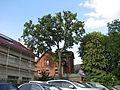 ND 611.073, 2, 1 Esche, Wolfsanger-Hasenhecke, Kassel.jpg