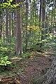 NPR Boubínský prales 20120910 27.jpg