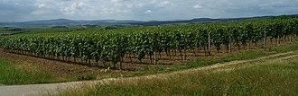 Nahe (wine region) - Vineyards in the Nahe region