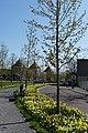 Nassausingel Breda P1360711.jpg
