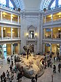 National Museum of Natural History, Washington, D.C. (2013) - 16.JPG