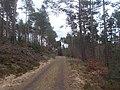Natur Pfälzerwald bei Waldleiningen 3.jpg