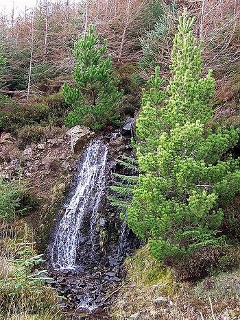 English: Natural water feature Burns cascade d...