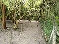Natureza Parque do Peri By Mauro Soares - panoramio (3).jpg