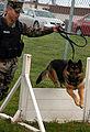 Navy working dogs DVIDS163754.jpg