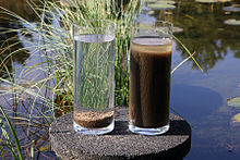 Nereda biomass left and activated sludge after only minutes of settling.jpg
