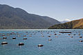 New Zealand Mussel farm-6379.jpg
