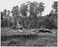 Newberry County, South Carolina. CCC enrollees burning brush on land that has been cleared for botto . . . - NARA - 522811.tif