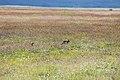 Ngorongoro 2012 05 30 2508 (7500994312).jpg