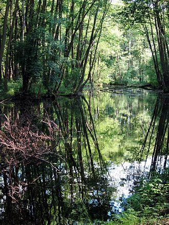 Tomaszów Mazowiecki - Niebieskie Źródła Nature Reserve
