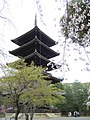 Ninna-ji National Treasure World heritage Kyoto 国宝・世界遺産 仁和寺 京都50.JPG