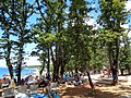 Njivice - hrastova šuma uz plažu.jpg