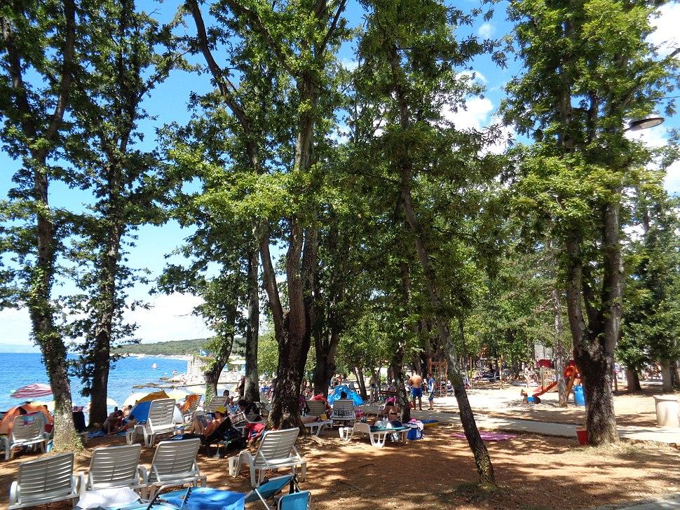 Njivice - hrastova šuma uz plažu