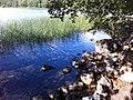 Norra Djurgården, Östermalm, Stockholm, Sweden - panoramio (13).jpg