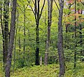 Northern Hardwood Forest (1) (21178820598).jpg