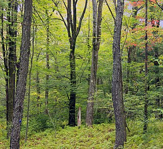 North American forest ecosystem