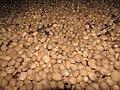 NutmegsGrenada14.jpg