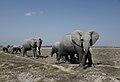Nw 9470 Amboseli elephantparade JF.jpg