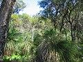 OIC gwelup bushland at lake karrinyup 1.jpg