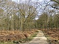Oak trees in the Sloden Inclosure, New Forest - geograph.org.uk - 157320.jpg