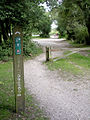 Off-road cycle route at Rans Wood, New Forest - geograph.org.uk - 36644.jpg