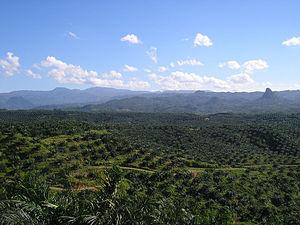 Deutsch: Palmölplantage gelegen in Cigudeg, be...
