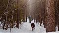 On the trail (6456099807).jpg