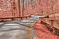 Opalescent Forest Road - HDR (15313526643).jpg