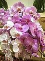 Orchid-12.jpg