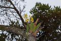 Orchidaceae (26756626870).jpg