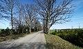 Ozolu ceļš uz Burtnieku ciematu - panoramio.jpg