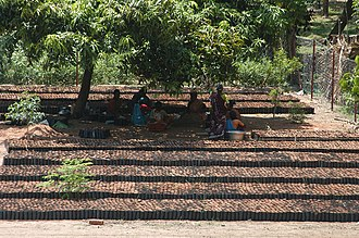 Isha Foundation - Saplings being readied for transportation at a PGH nursery.